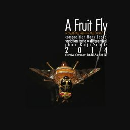 A Fruit Fly <br /> struggling against my breath <br /> Hans Jacobi