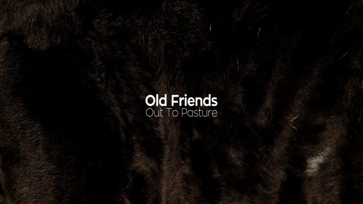 Old Friends still 10